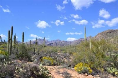 Désert de Sonora près de Tucson en Arizona