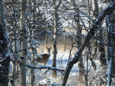 Les animaux en hiver